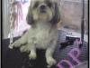 doggy-apres